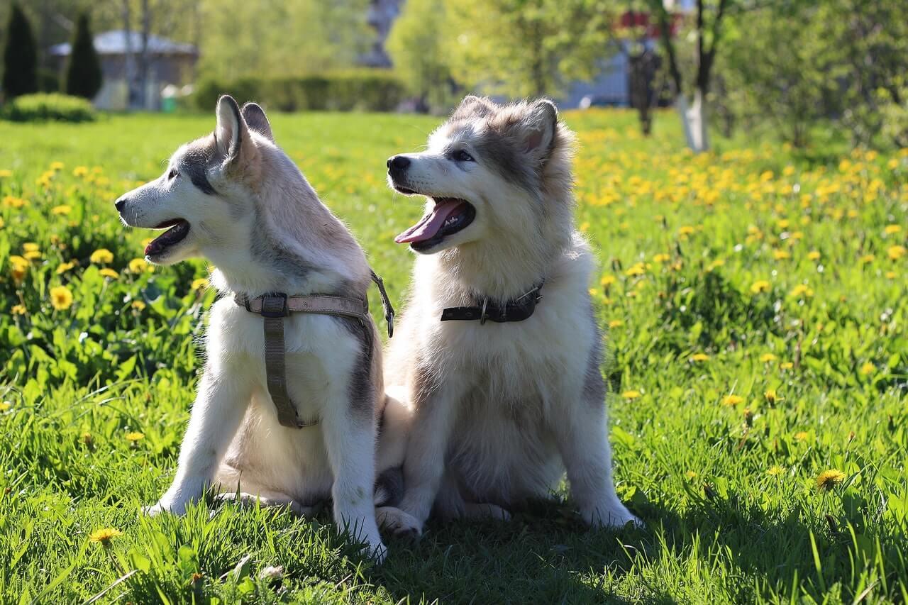 Gryzaki naturalne dla psów, jak je dobierać?